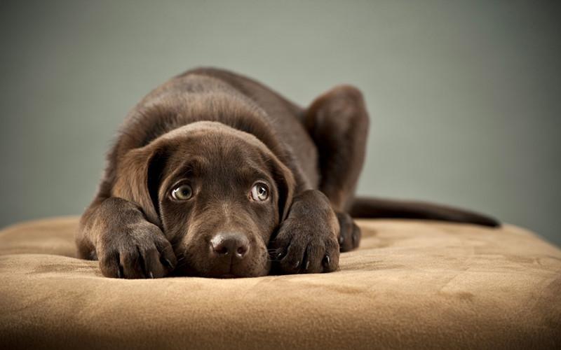宠物狗的家常美容法